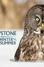Watch Vodly Yellowstone Wildest Winter to Blazing Summer Online